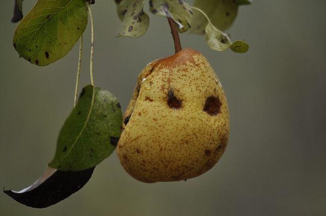 Körtefa betegségei